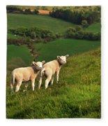 Two Welsh Lambs Fleece Blanket