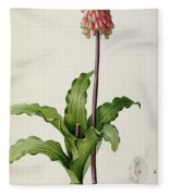 Veltheimia Capensis Fleece Blanket
