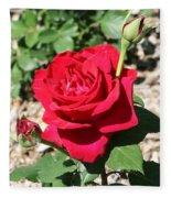 Velvet Red Rose Fleece Blanket