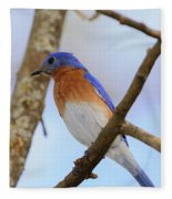Very Bright Young Eastern Bluebird Perched On A Branch Colorful Fleece Blanket
