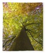 View To The Top Of Beech Tree Fleece Blanket