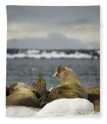 Walruses With Giant Tusks At Arctic Haul-out Fleece Blanket