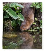 Water Vole Fleece Blanket