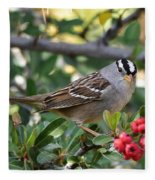 White Crowned Sparrow 1 Fleece Blanket