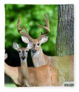 White-tailed Deer Family Fleece Blanket