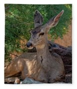 White-tailed Deer H1829 Fleece Blanket