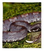 White-tailed Hognose Viper Fleece Blanket