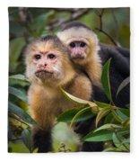 White-throated Capuchin Monkeys Cebus Fleece Blanket