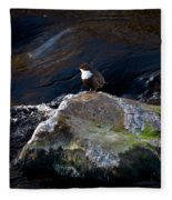White-throated Dipper Nr 1 Fleece Blanket