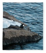 White-throated Dipper Nr 3 Fleece Blanket