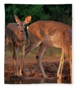 Whitetail Deer At Waterhole Texas Fleece Blanket