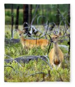 Whitetails Fleece Blanket