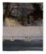 Whooper Swan Nr 14 Fleece Blanket