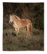 Wild Horse At Sunset Fleece Blanket