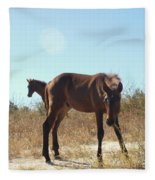 Wild Horses Desert Of Mexico Fleece Blanket