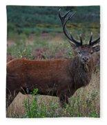 Wild Red Deer Stag Fleece Blanket