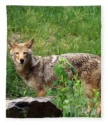 Wiley Coyote Fleece Blanket