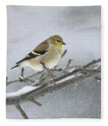 Winter Finch 2010 Fleece Blanket