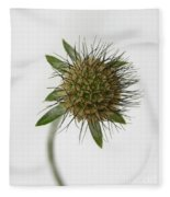 Winter Pin Cushion Plant Fleece Blanket