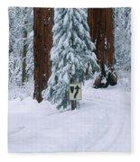 Winter Road Into Sequoia National Park Fleece Blanket
