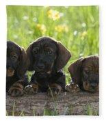Wire-haired Dachshund Puppies Fleece Blanket