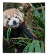 Wizened Red Panda Fleece Blanket