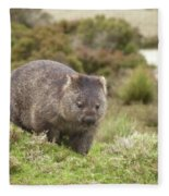 Wombat Tasmania #1 Fleece Blanket