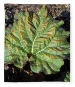 Wrinkled Green Rhubarb Leaf Fleece Blanket