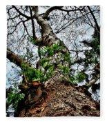 Ye Ole Tree At Chichen Itza Fleece Blanket