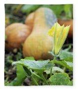 Yellow Pumpkin Flower Closeup Garden Autumn Season Fleece Blanket