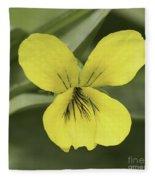 Yellow Wild Violet Fleece Blanket