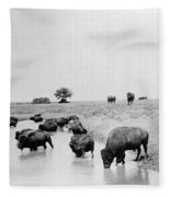 Yellowstone: Bison, C1905 Fleece Blanket