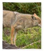 Yellowstone Coyote Scout Fleece Blanket