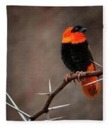 Yikes Spikes - Red Bishop Weaver Bird Fleece Blanket