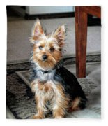 Yorkshire Terrier Dog Pose #6 Fleece Blanket