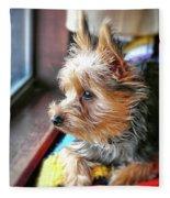 Yorkshire Terrier Dog Pose #8 Fleece Blanket