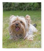 Yorkshire Terrier Is Smiling At The Camera Fleece Blanket