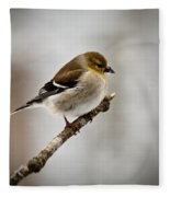 Young American Golden Finch 1 Fleece Blanket