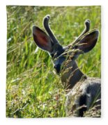 Young Black-tailed Deer With New Antlers Fleece Blanket