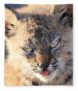 Young Bobcat 04 Fleece Blanket