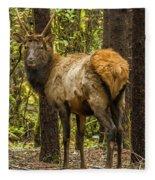 Young Bull Elk Fleece Blanket