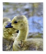 Young Canadain Goose Fleece Blanket