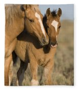 Young Mustangs Playing Fleece Blanket