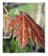 Young Red Maple Leaf In May Fleece Blanket