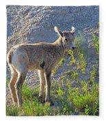 Young Rocky Mountain Bighorn Sheep Fleece Blanket