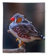 Zebra Finch Fleece Blanket