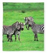 Zebras Fleece Blanket