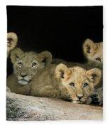Four Cubs Fleece Blanket