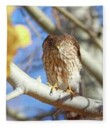 Juvenile Cooper's Hawk  Fleece Blanket