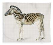 Mountain Zebra  Dauw  Illustrated By Charles Dessalines D' Orbigny  1806-1876  Fleece Blanket